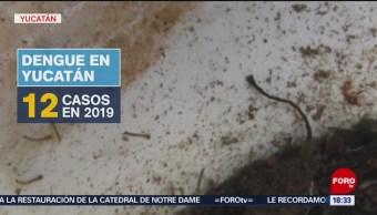 Yucatán, en alerta por plaga de moscos