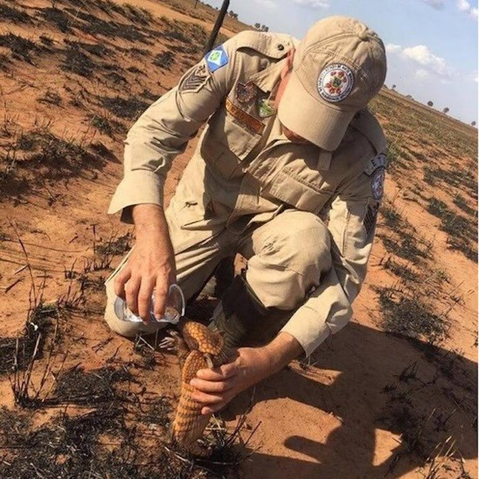 Foto Bombero da agua a un armadillo afectado por incendio en el Amazonas 23 agosto 2019