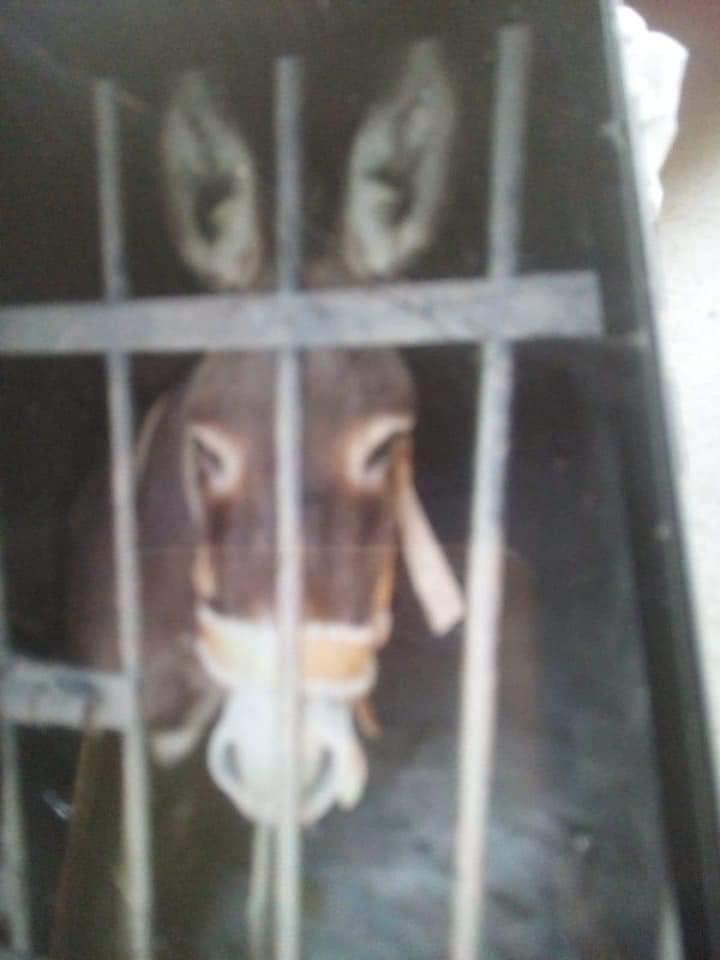 burro encarcelado en oaxaca