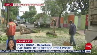 FOTO: Cae árbol 15 metros San Diego Ocoyoac CDMX