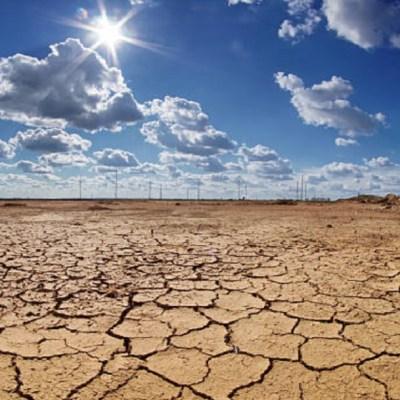 ONU: Hay que cambiar la dieta para detener el cambio climático