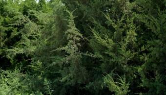 FOTO Chiapas sentencia a 2 hombres a sembrar árboles por ecocidio (AP, archivo)