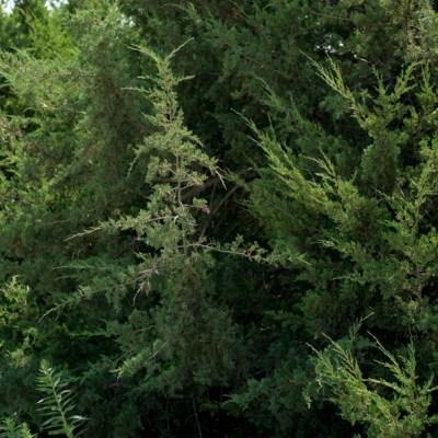 Chiapas sentencia a 2 hombres a sembrar árboles por ecocidio