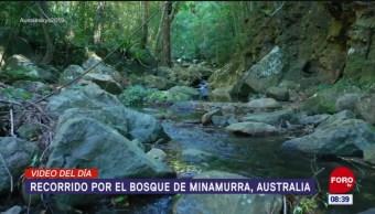 #ElVideodelDía: Recorrido por el bosque de Minamurra, Australia