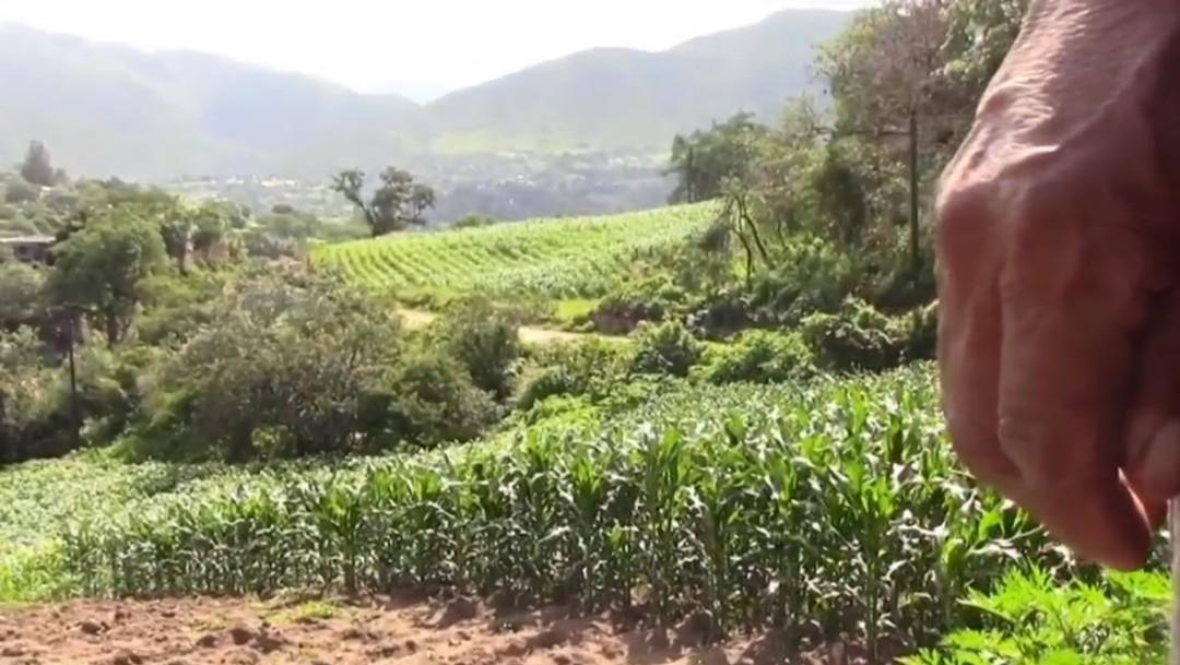 Permanece escasez de fertilizantes, en Guerrero; afecta a cosechas de campesinos