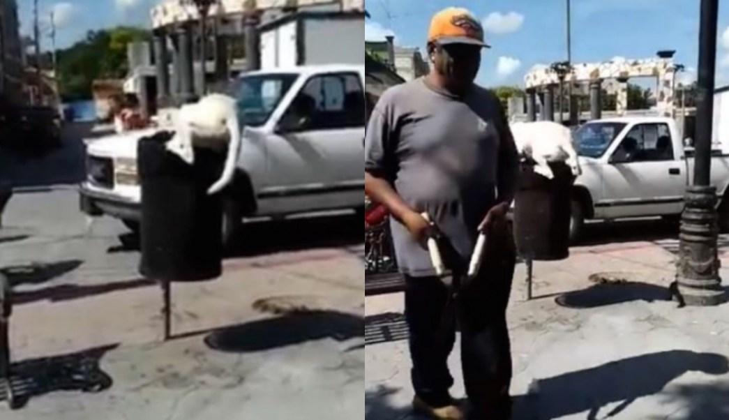 Hombre Corta Cola Perro, Maltrato Animal, Huehuetlán El Chico, Puebla, Hombre Corta La Cola A Un Perro En Puebla, Hombre Le Corta Cola A Perro