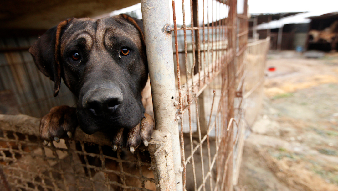 Imagen: Este fue el primer juicio por maltrato animal en Nuevo León, además de la primera sentencia, 12 de agosto de 2019 (AP, archivo)