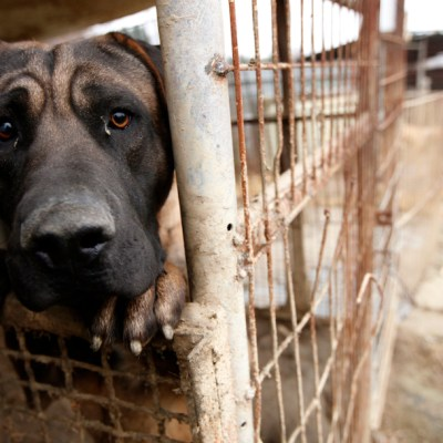Imponen pena histórica por maltrato animal en Nuevo León
