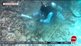 FOTO:Inician siembra masiva de 11 especies de coral en Quintana Roo, 31 Agosto 2019