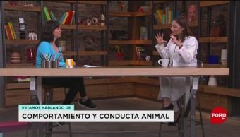 FOTO: La importancia de la terapia en los animales, 18 Agosto 2019