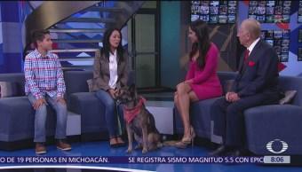 Layla, perro policía jubilada, visita estudio de Al Aire