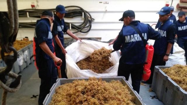 Foto: La Secretaría de Marina realiza acciones para combatir el sargazo en costas mexicanas, el 31 de agosto de 2019 (Cuartoscuro)