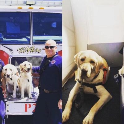 Perros de apoyo reconfortan a víctimas de tiroteo en El Paso, Texas