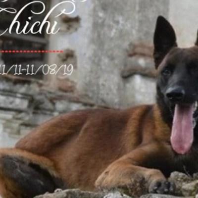 Muere 'Chichí', uno de los perritos rescatistas del 19S