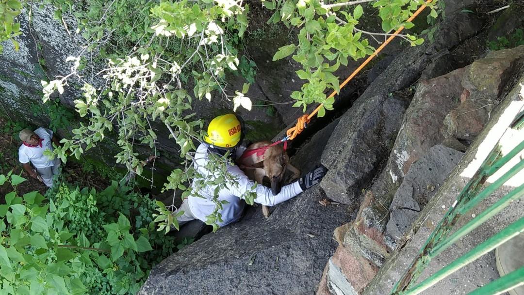 Rescatan a un joven y dos perritos en Tonalá, Jalisco
