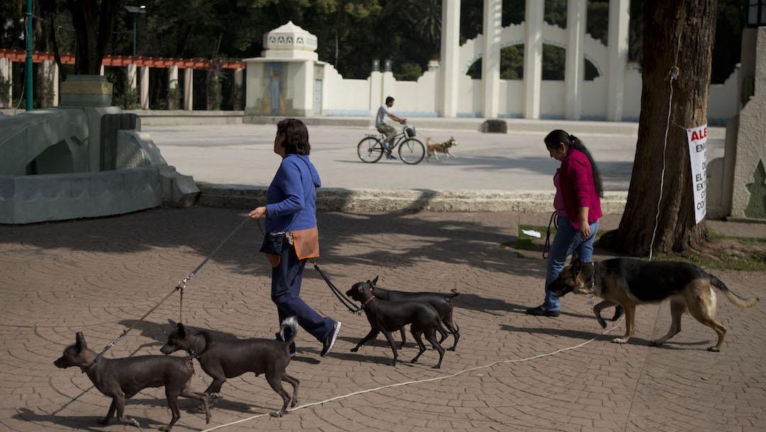 Entrenador-perro-maltrato-animal-Colonia-Condesa-Parque-Mexico