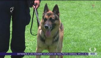 ¿Qué hacen los perros policía?