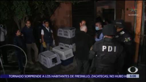 Rescatan a 53 perros en vivienda de alcaldía Gustavo A. Madero