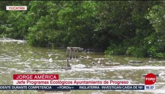 Foto: Realizan Labores Limpieza Manglares Yucatán