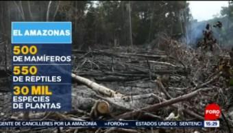 FOTO: Siguen incendios en Amazonas, considerado 'pulmón del mundo', 25 Agosto 2019