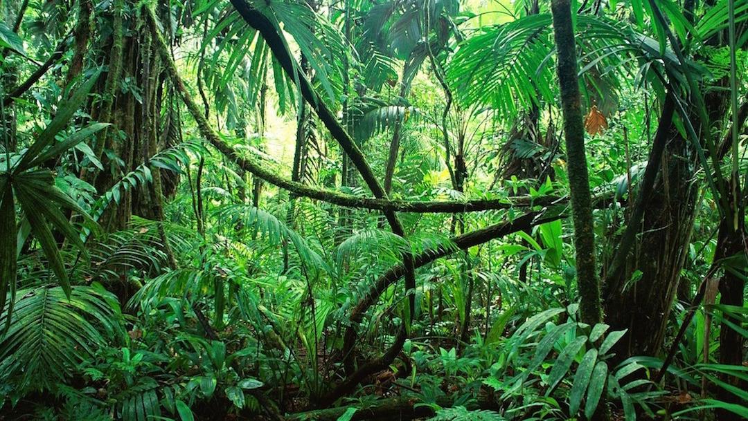 Foto:biodiversidad-chiapas-jungla.22 agosto 2019
