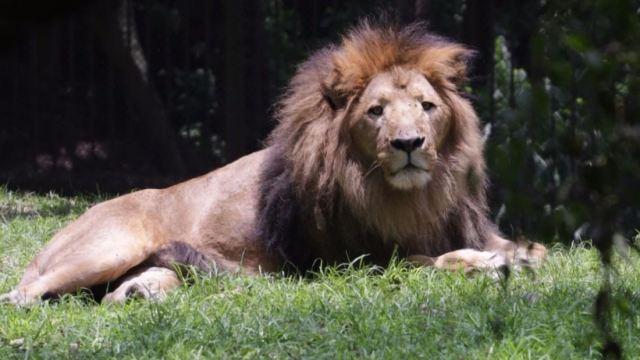 Recortan presupuesto a zoológicos en la CDMX; animales se ven afectados.