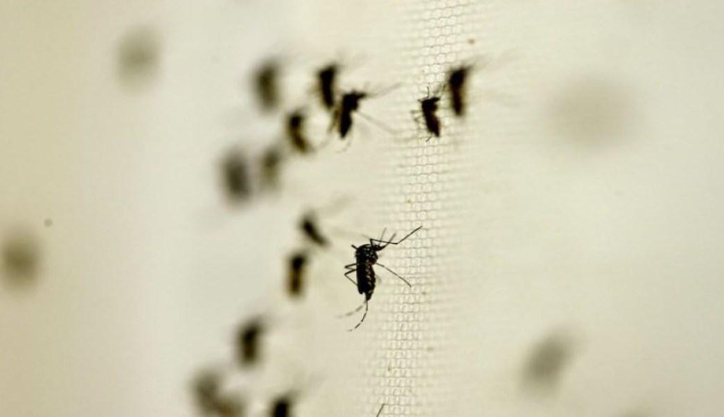 Resultado de imagen para amlo venta de insecticidas