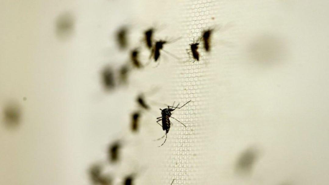 Foto AMLO da a conocer acciones para prevenir transmisión del dengue 5 septiembre 2019