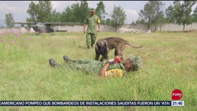Foto: Entrenamiento Perros Rescatistas Sedena 18 Septiembre 2019
