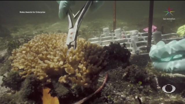 Foto: Científicos Estudian Especies Resistentes Coral Salvar Arrecifes Australianos 2 Septiembre 2019