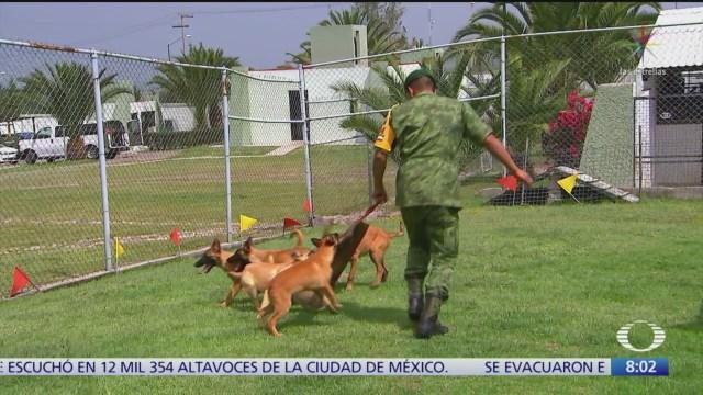 Cómo nacen y entrenan a los perros de rescate, como Frida