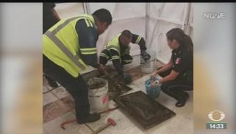 FOTO: Encuentran Cocaína Drenaje AICM