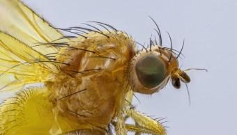 Foto:insectos. 5 septiembre 2019