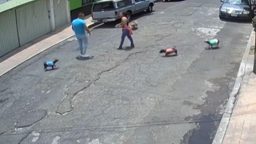 Video: Hombre taclea a mujer tras pelea de perritos en CDMX