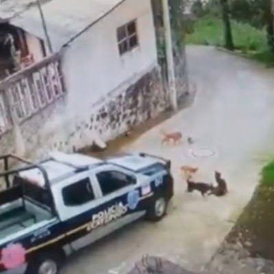 Video: Patrulla atropella y mata a perrito en Edomex