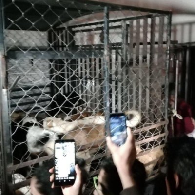 Mujer robaba perros y gatos para matarlos y vender la carne, en Puebla