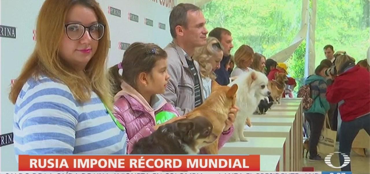 FOTO: Rusia impone nuevo récord mundial de sesión de fotos para perros, 16 septiembre 2019