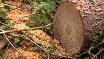 Tala ilegal de árboles, devastación severa en Ocuilan, Estado de México