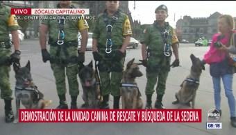 Unidad Canina de Rescate hace demostraciones en Zócalo CDMX por aniversario 19S
