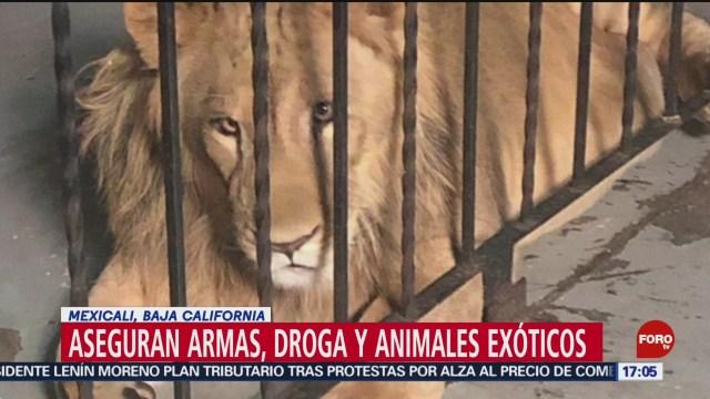 FOTO: Aseguran armas, droga y animales exóticos en Mexicali, 20 octubre 2019