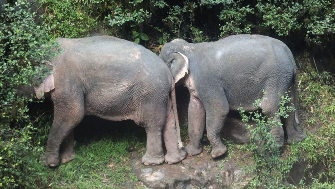 Foto: Mueren once elefantes en accidente en Tailandia, 5 de octubre de 2019