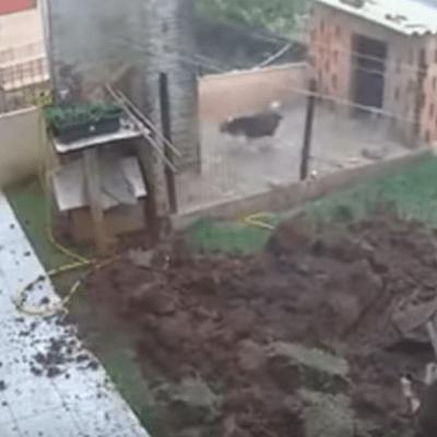 Video: Explota su patio para deshacerse de plaga de cucarachas