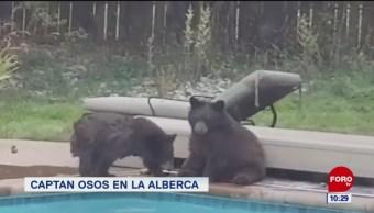 Extra, Extra: Captan osos en la alberca