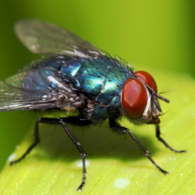 Video: Niño come dos moscas durante entrevista en vivo y se vuelve viral