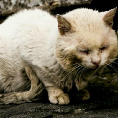 Plantean hasta dos años de prisión por maltratar animales