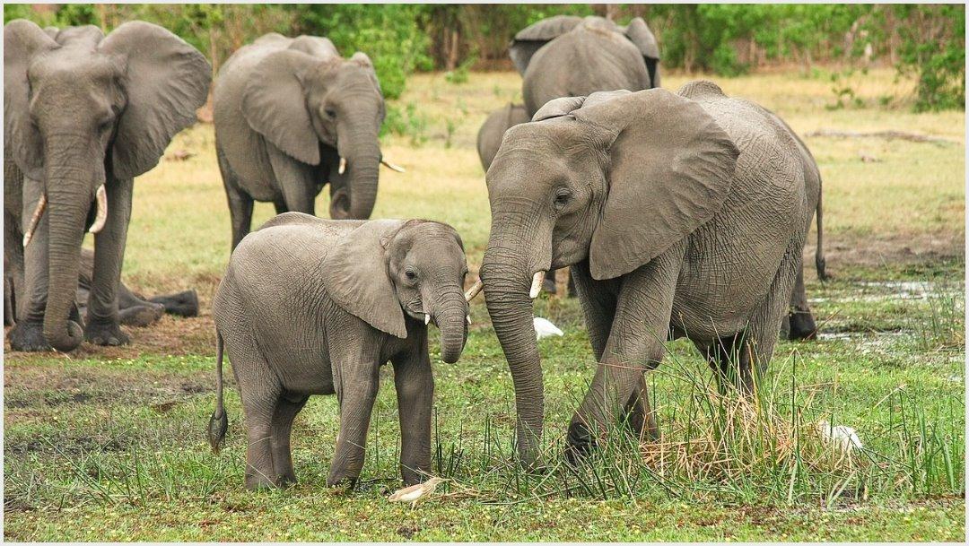 Imagen: Seis elefantes fallecieron tras caer en cascada de Tailandia, 5 de octubre de 2019 (pixabay)