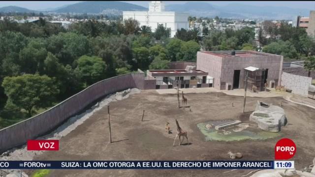 Niegan muerte de animales por maltrato en zoológico de Aragón