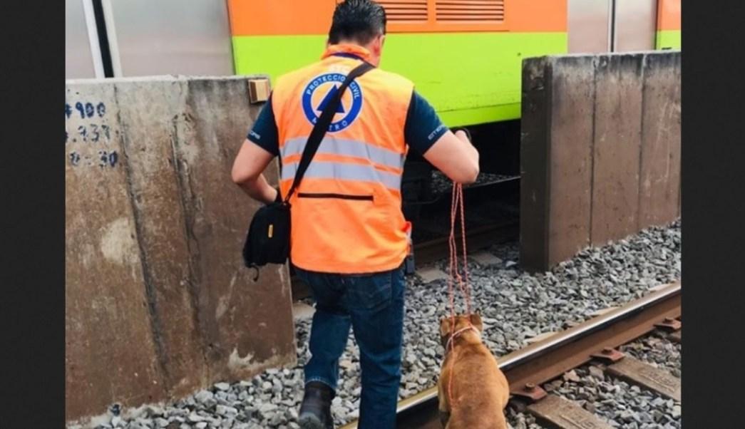 Perro rescatado en el Metro