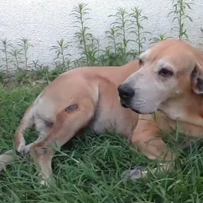 Este es 'Marcos', el perro que lleva dos años esperando a su dueño afuera del hospital