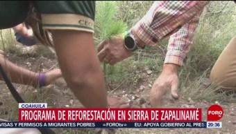 FOTO: Plantan más de 10 mil árboles en la Sierra de Zapalinamé, 12 octubre 2019
